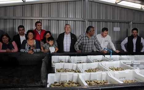 Gremio pesquero de Caleta San Pedro inaugura nueva planta depuradora de moluscos