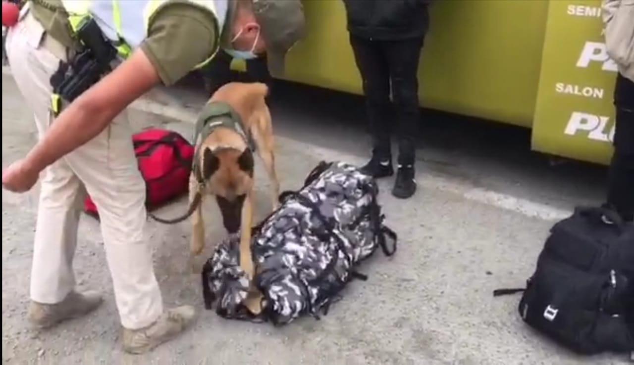 Perro detector de drogas de Carabineros evitó ingreso de 40.700 dosis de pasta base a la región