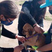 Coquimbo: Realizan operativo de educación y esterilización de mascotas en sector La Pampilla
