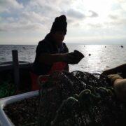 A partir de la identificación de brechas tecnológicas buscan apoyar la Acuicultura de Pequeña Escala en la Región de Coquimbo