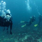 Las maravillas del mar: El buceo en Tongoy sigue captando la atención del público en plena pandemia