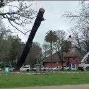 Concepción: Talan árbol y por error destruyen monumento en homenaje a Simón Bolívar