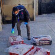 Nuevamente: 140 kilos de carne fueron decomisados en control carretero en Los Vilos