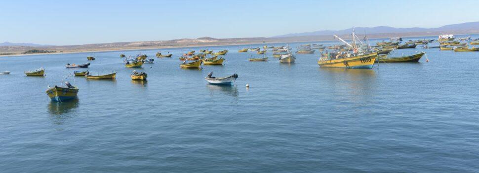 Subpesca activa cuota de imprevistos de 25 mil toneladas de jurel para las regiones de Atacama y Coquimbo