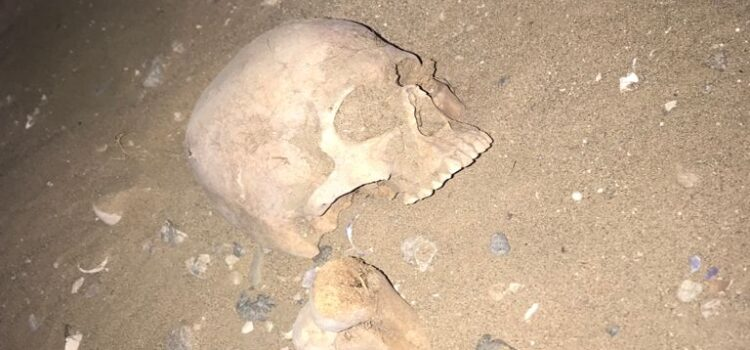 Trabajadores encuentran osamentas arqueológicas en un terreno particular de Los Choros