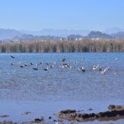 Gobierno Regional inicia acciones para proteger los humedales costeros de las tres provincias
