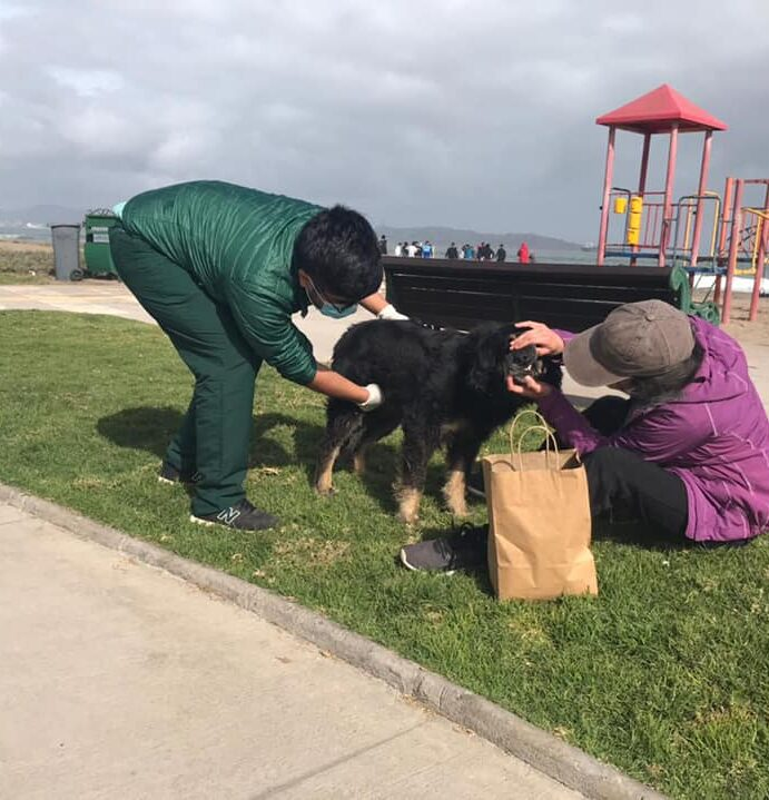 Aplican nuevas estrategias de adopción de perros abandonados en La Serena